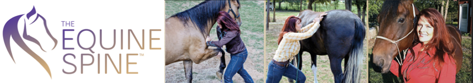 Equine, Feline & Canine Spine Adjustment, The Equine Spine Fort Worth & Weatherford, Justin